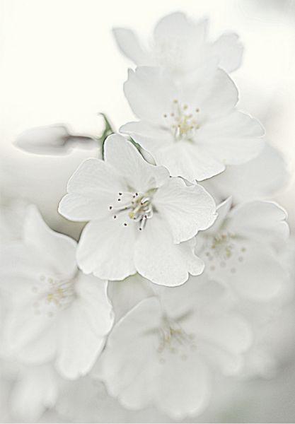 Schone Blumen Versussen Auch Buroshop24 Den Tag Alles In Weiss