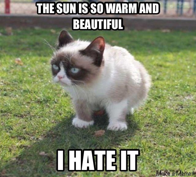 No Love For The Sun Grumpy Cat Meme Funny Animal Jokes Funny Cats