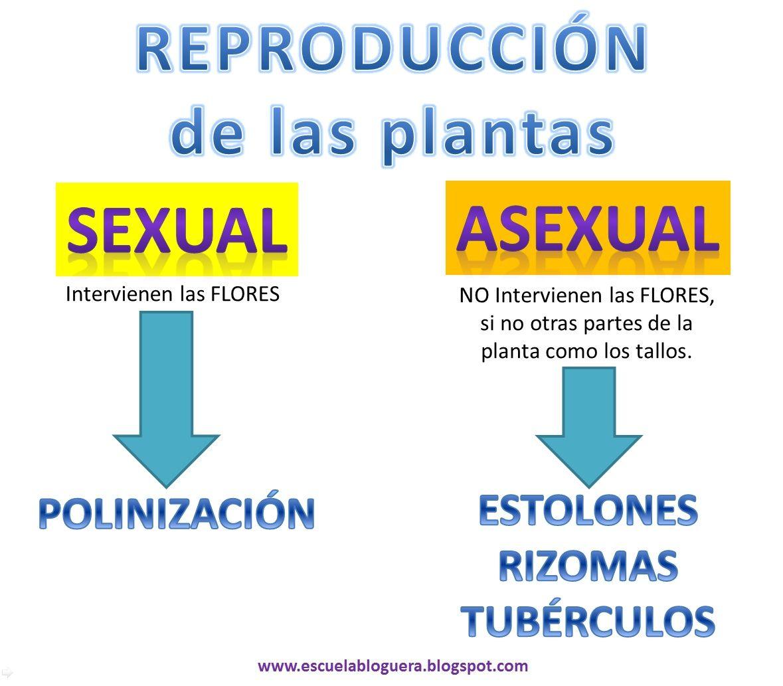 Reproduccion asexual en plantas mapa conceptual definicion