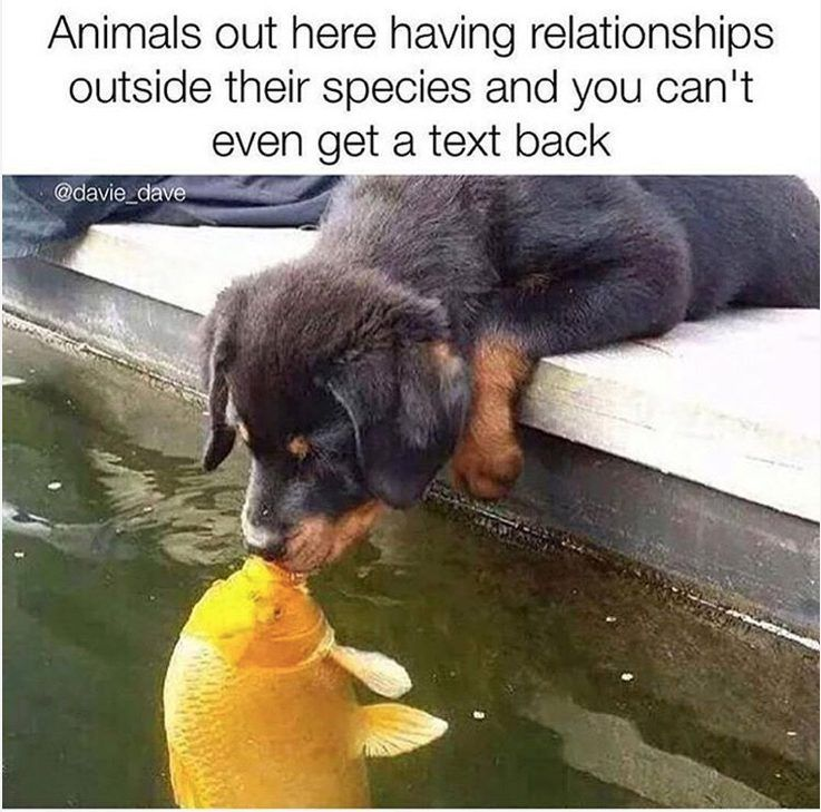 We Totally Understand That Some People Are Single By Choice And More Power To Those People While Others We Cute Dog Memes Funny Animals Funny Animal Memes