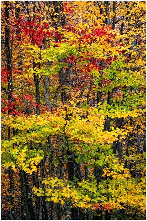 ✯ Autumn Layers...