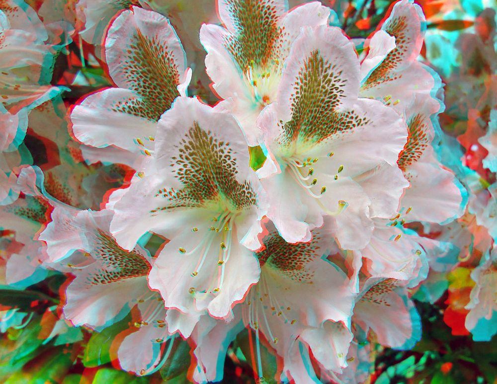 Rhododendron von Alex-3D