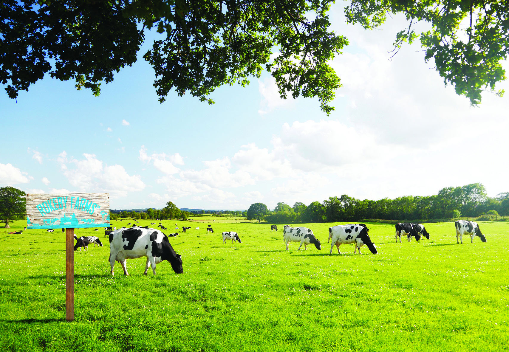 to Rokeby Farms. We source quality fresh dairy