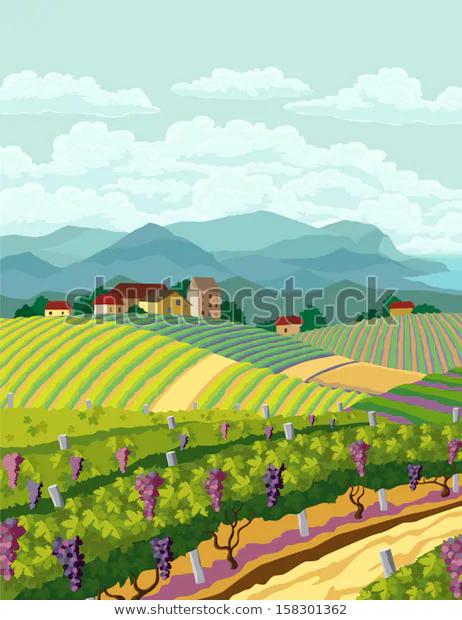 Image Vectorielle De Stock De Paysage Rural Avec Vignes Et Panorama 158301362 Paysage Rural Paysage Vigne Paysage