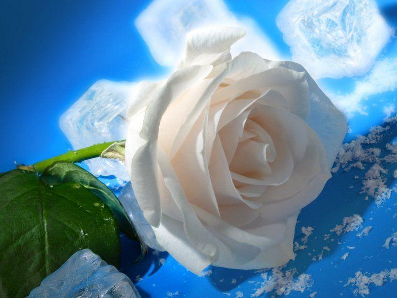 Image Result For Rosas Blancas En El Cielo Wallpaper Flowers Gif
