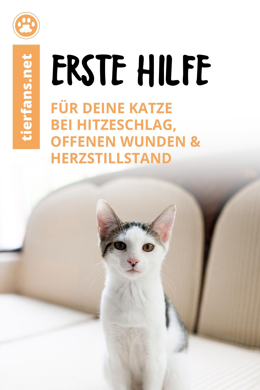 Erste Hilfe für deine Katze in 2020 Katzen