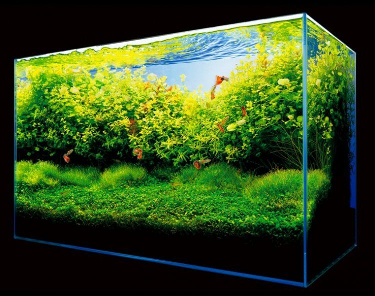 Ada nature aquarium aquascape the green machine the for Ada fish tank