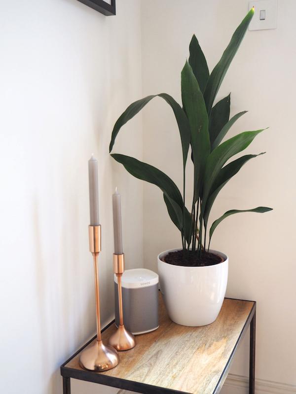 Photo of Zimmerpflanzen, die auch im dunklen Bad gut gedeihen – Fresh Ideen für das Interieur, Dekoration und Landschaft