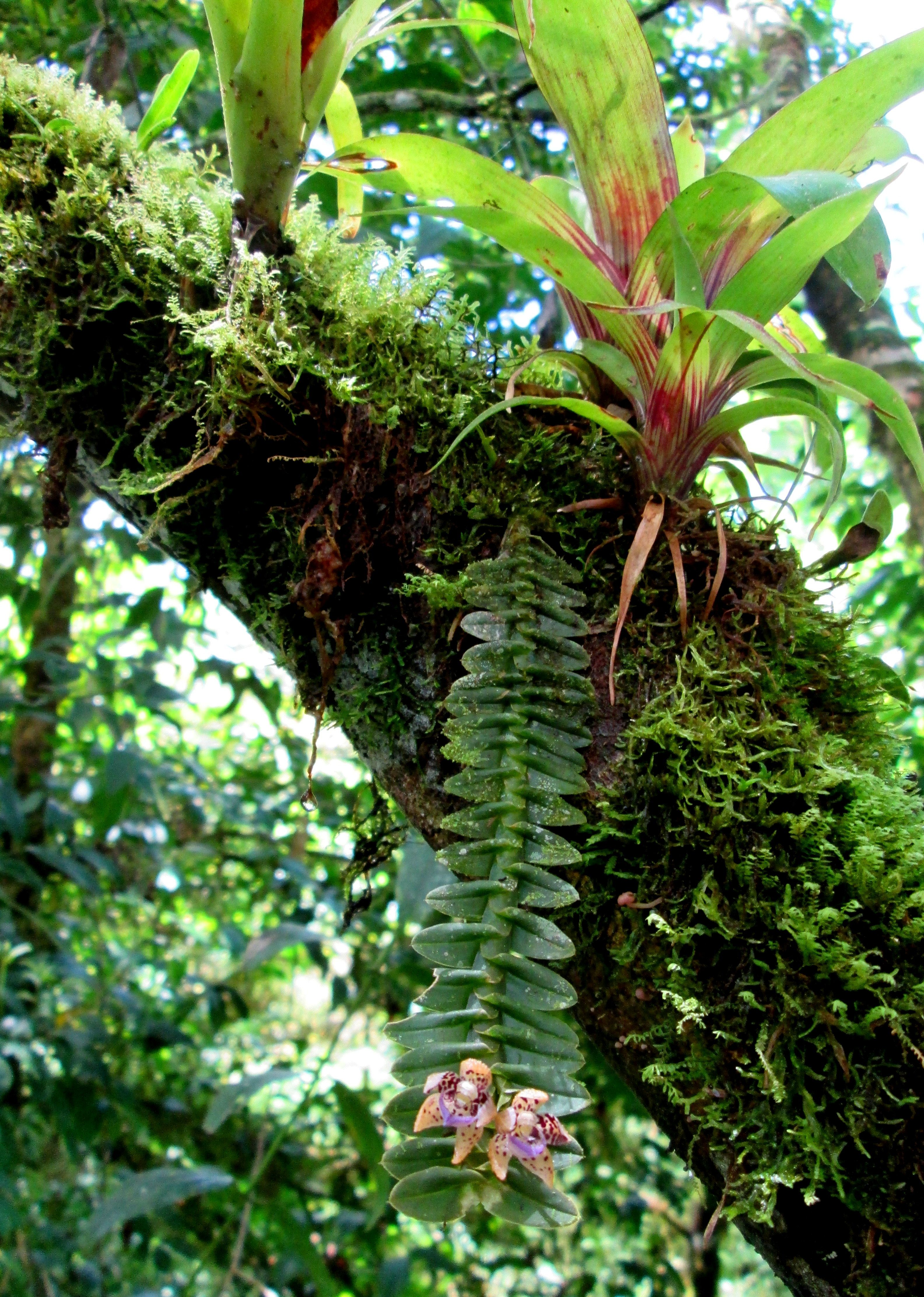 epiphyte and tree relationship