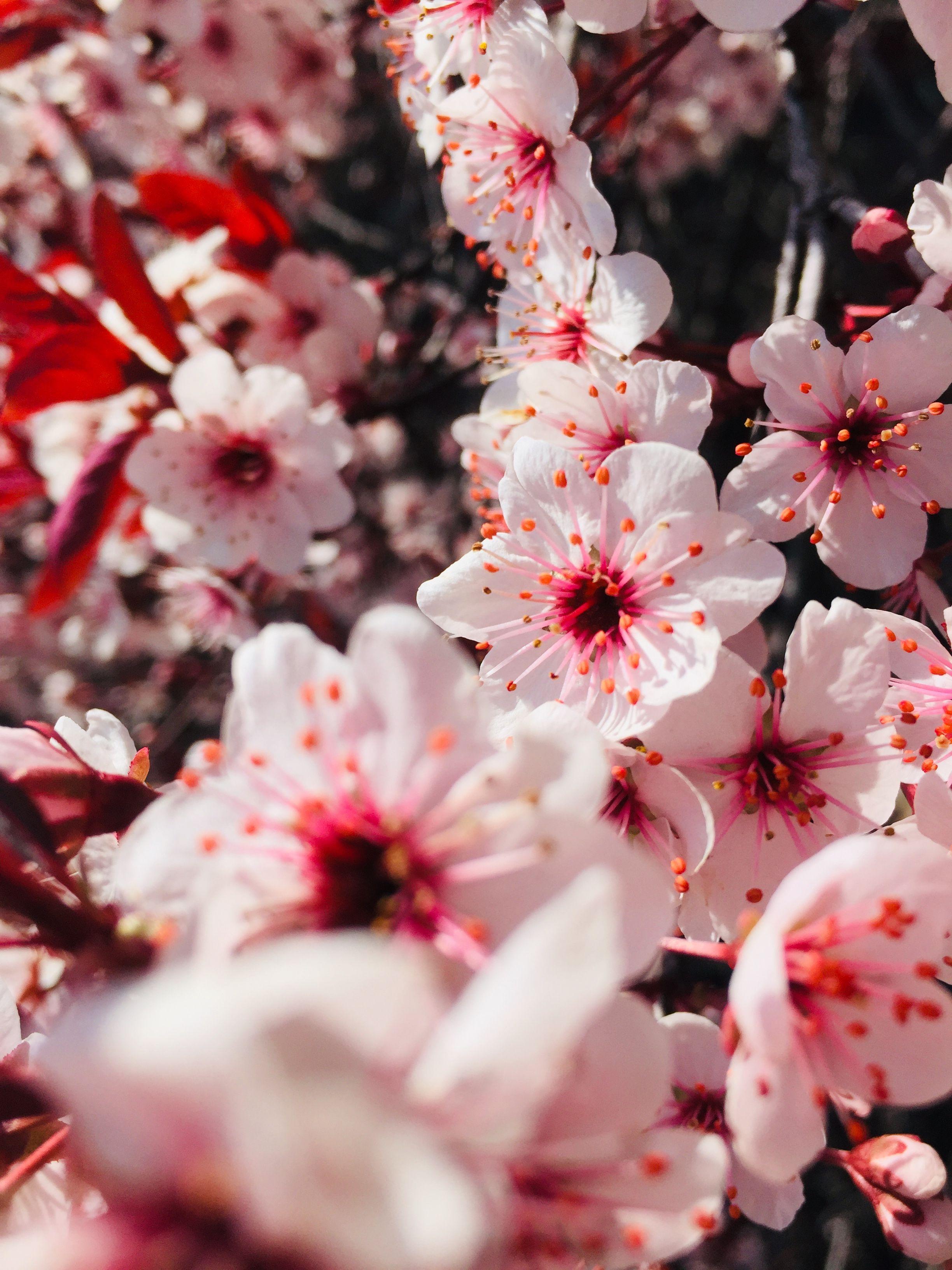 Beautiful flowers spring in 2020 popular flowers fresh