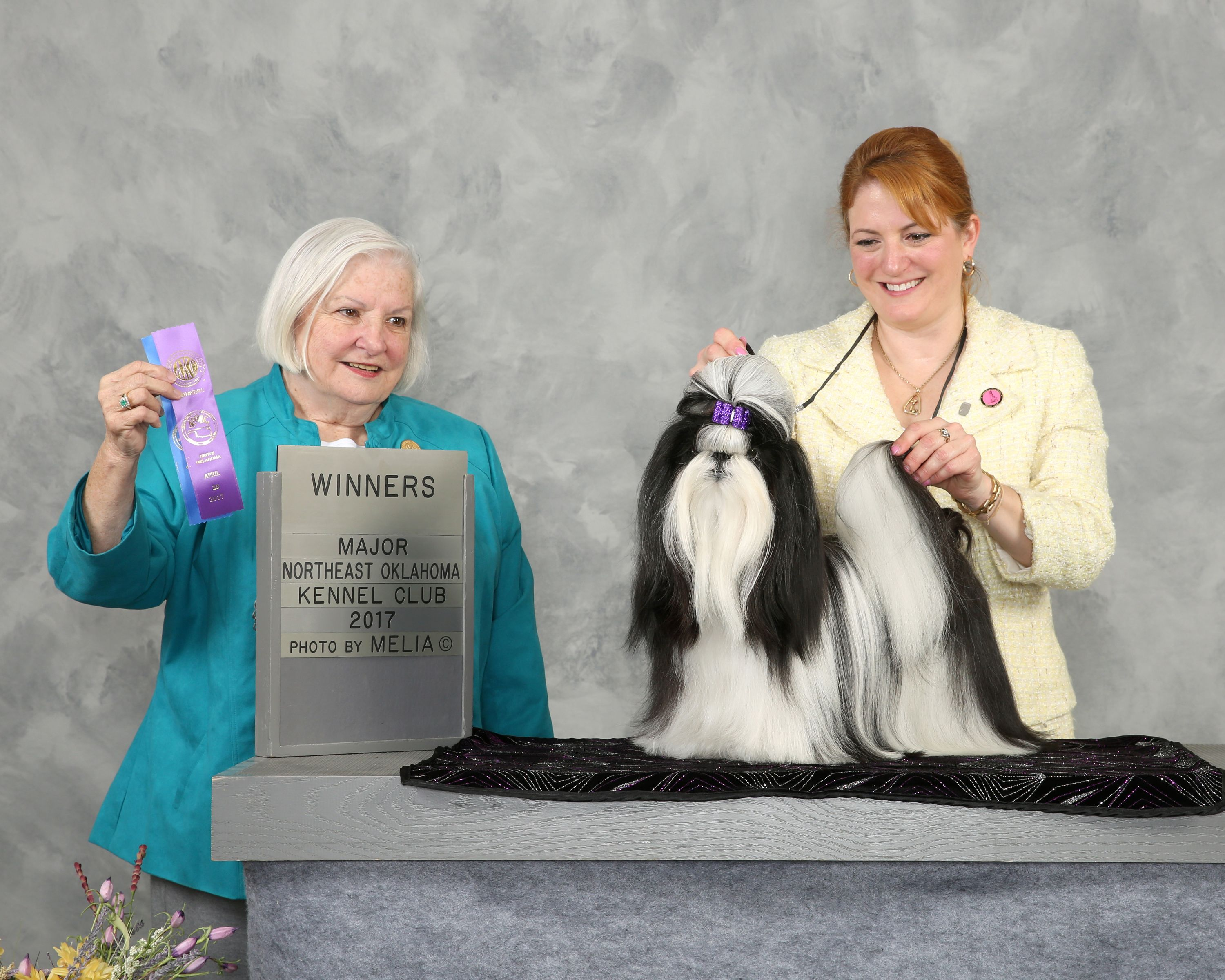 Reagan S First Major In Grove With Sharon Svoboda 2017 With Images Northeast Oklahoma Shih Tzu 2017 Photos