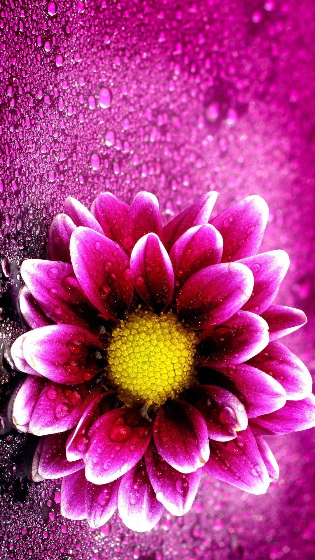 Pink Flower Wallpaper iPhone Best iPhone Wallpaper