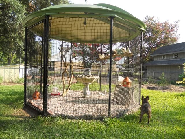 Old satellite dish aviary Poultry Pinterest Dishes and