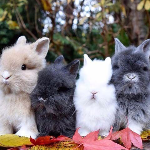 pin von marie laure noe auf hasen pinterest kaninchen s e tiere bilder und baby kaninchen. Black Bedroom Furniture Sets. Home Design Ideas