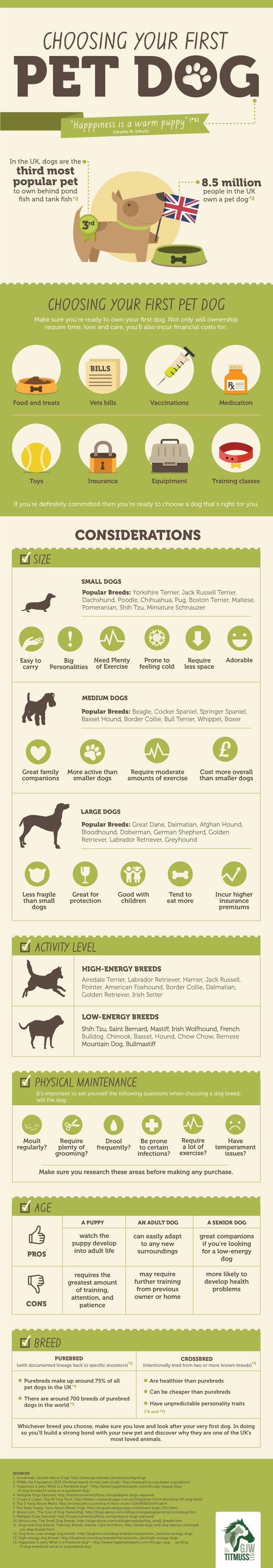 Choosing Your First Pet Dog Infographic Helpful Info About The