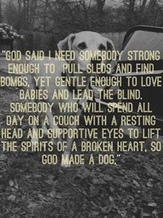 Dogs are wonderful!