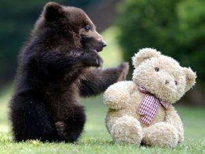 cute little bear plays with teddy bear