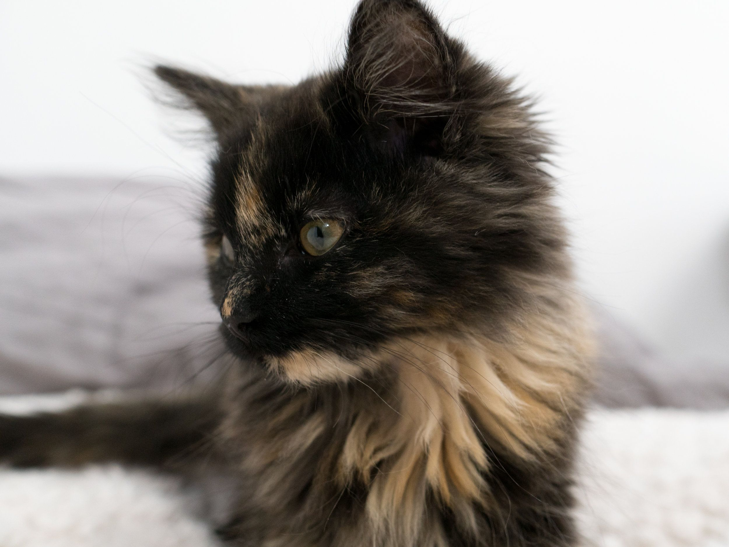 Newton Newt Female Kitten Academy Kitten Beautiful Cats Crazy Cats