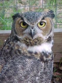 41bb2235e35437d173cad4b5e6e2a150 - Louisiana Purchase Gardens & Zoo Monroe La