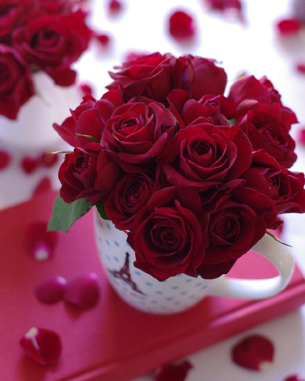том, картинки с добрым утром с розами картинки этого его никто