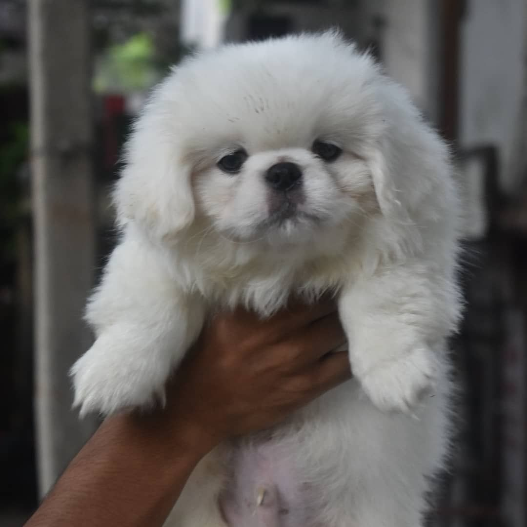 Pin On Dogs For Sale Near Me