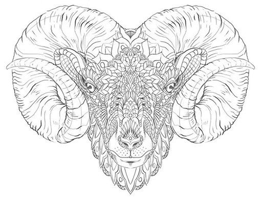 Ram Head Tattoo Design Sketch Coloring Page