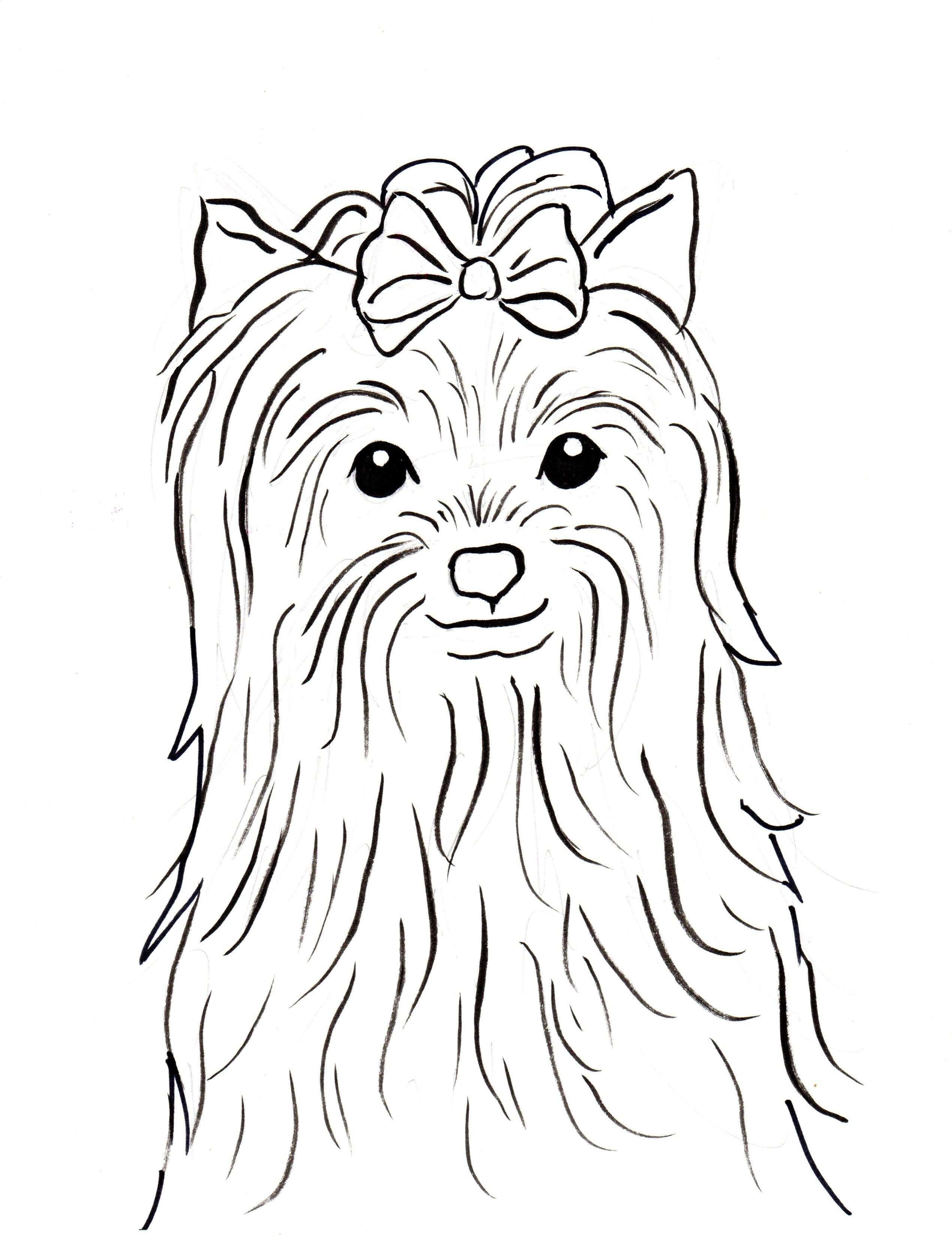 Yorkshire Terrier Coloring Page Samantha Bell Sketch Coloring Page