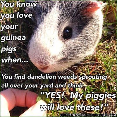 Dandelion greens - a fan favorite
