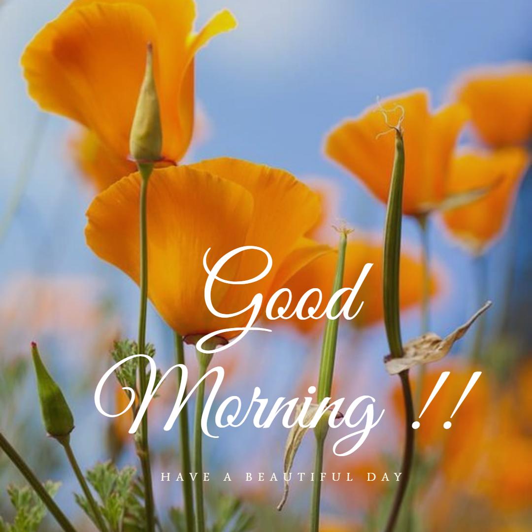 Good Morning Quotes #goodmorning #morning #Morningquotes ...