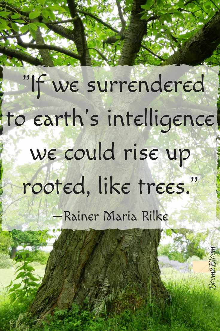 Earth Quotes Entrancing Nature Is My Sanctuary  Quotes About Nature Ebook  Tree Quotes . Inspiration Design