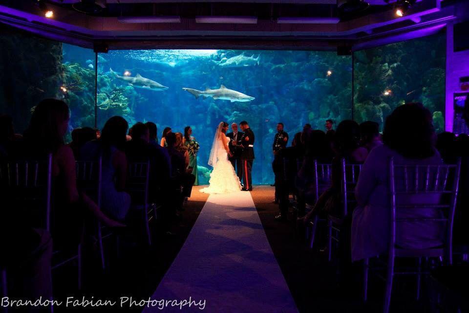 Florida aquarium wedding!