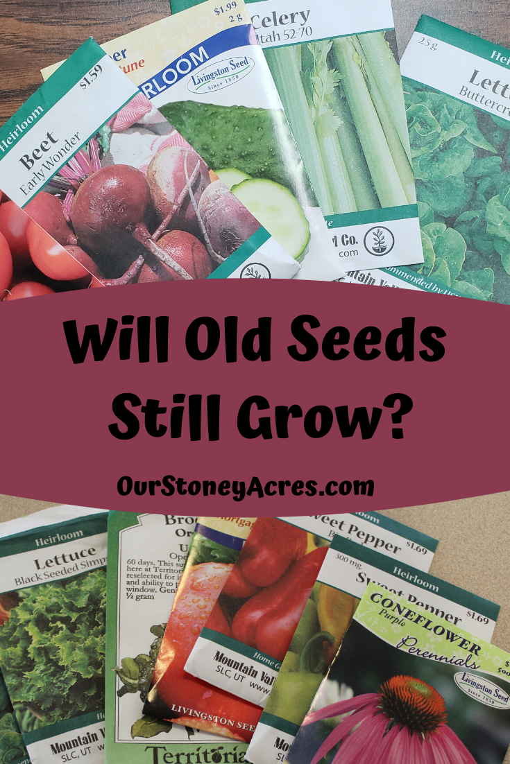 Will Old Seeds Still Grow  Sprouting Test is part of Vegetable garden design, Organic vegetables, Veg garden, Veggie garden, Edible garden, Organic vegetable seeds - Will Old Seeds still grow  The general answer for this question is yes, assuming the seeds are less than 5 years old  Learn more about seed storage here