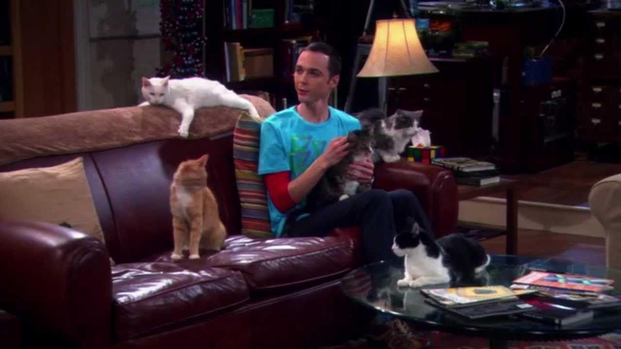 The Big Bang Theory Katzen Oppenheimer Und Co The  # Muebles Big Bang Theory