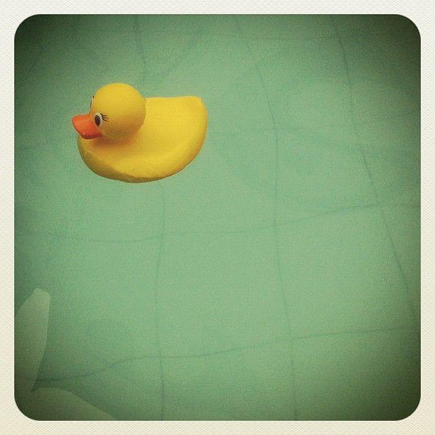 Pato de tina conoce piscina y espera conocer algún día el mar. http://bit.ly/PatoDelAgua