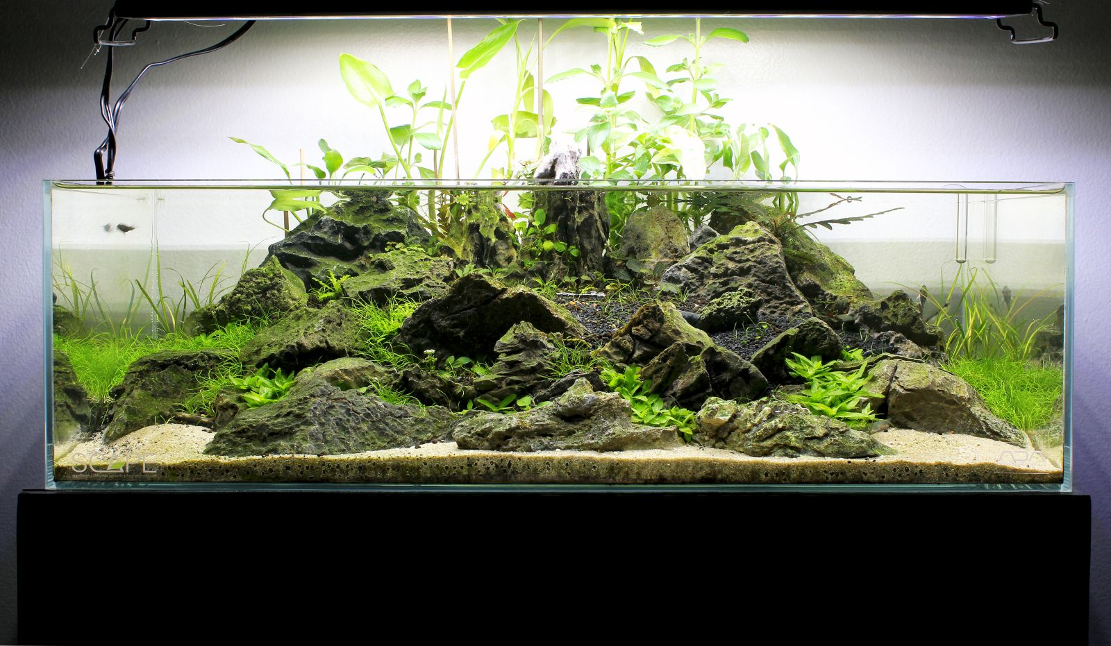 Ada 60f shallow tank page 3 aquascapes pinterest for Ada fish tank