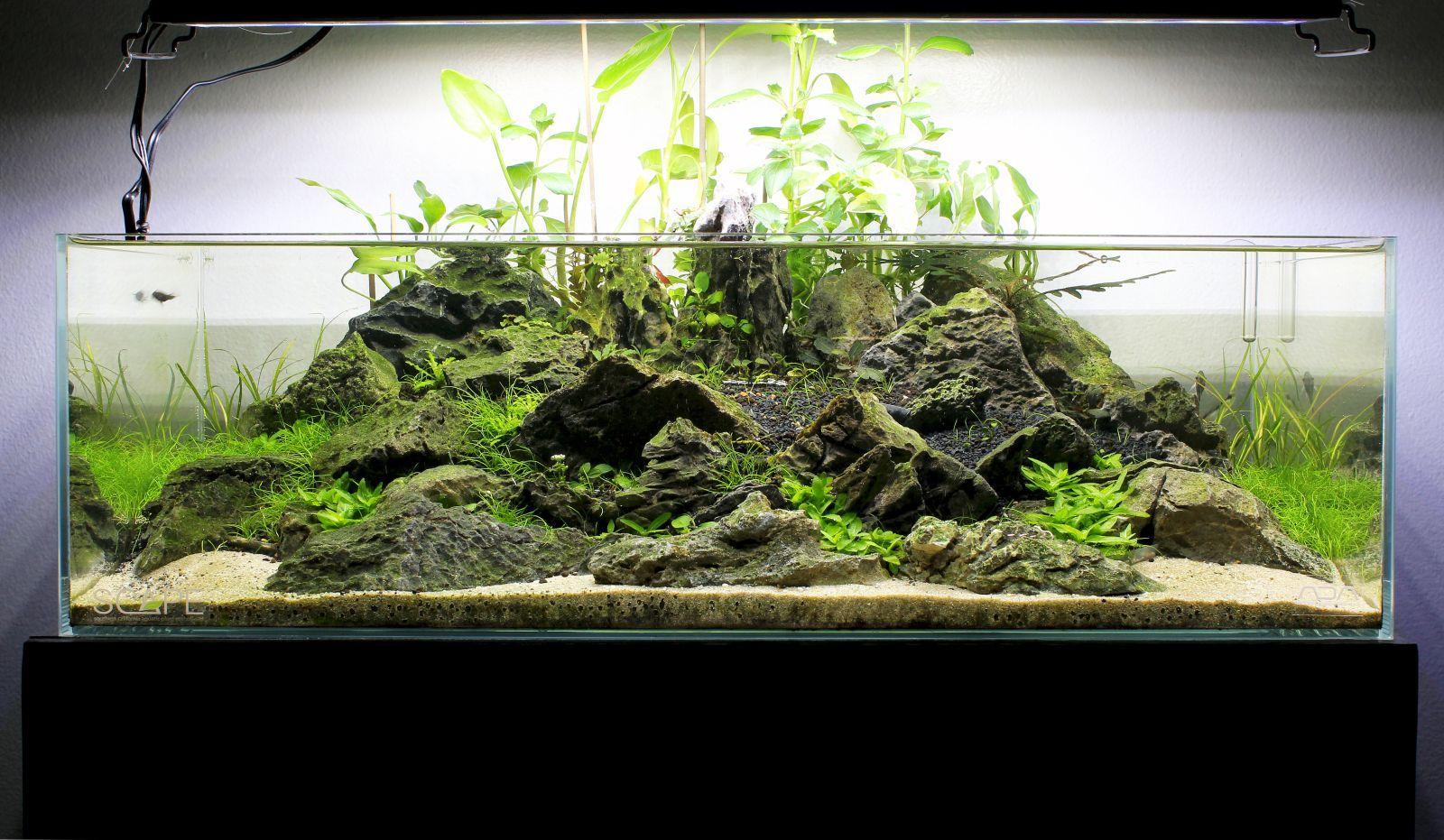 Ada 60f Shallow Tank Page 3 Aquascapes Betta Tank Fish Tank