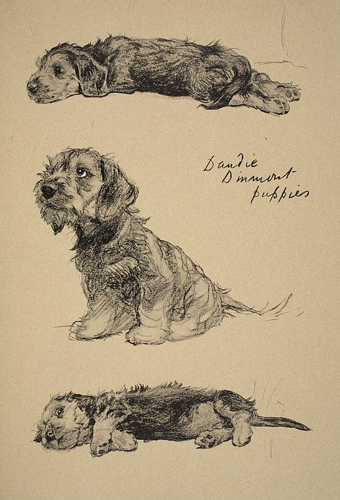 Dandie Dinmont Puppies, 1930 Greeting Card for Sale by Cecil Charles Windsor Aldin