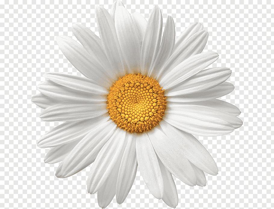 White Flower Png Clipart Image White Flower Png Flower Clipart Png Clip Art