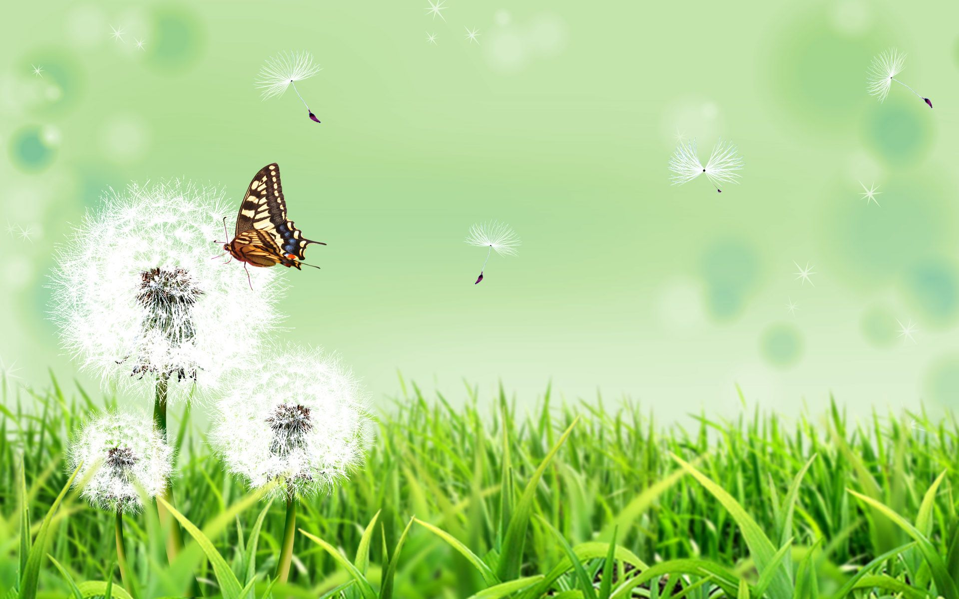 Free Scenery Wallpaper Includes Dandelion And Butterfly Doing