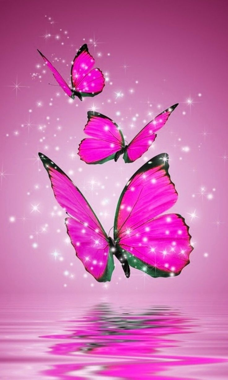 Pink And Black Butterfly Wallpapers Currently 2 50 5 1 2