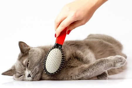 Coconut Oil for Pets: Uses, Benefits, and Tips! - Coconut Oil Tips