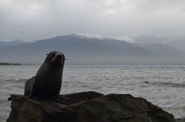 Nuestros días en la Isla Sur de Nueva Zelanda  en esta ruta de tres semanas por el país estaban tocando a su fin, aunque aún nos quedaba la...