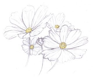 How To Draw Gerbera Drawings Daisy Drawing Flower Sketches