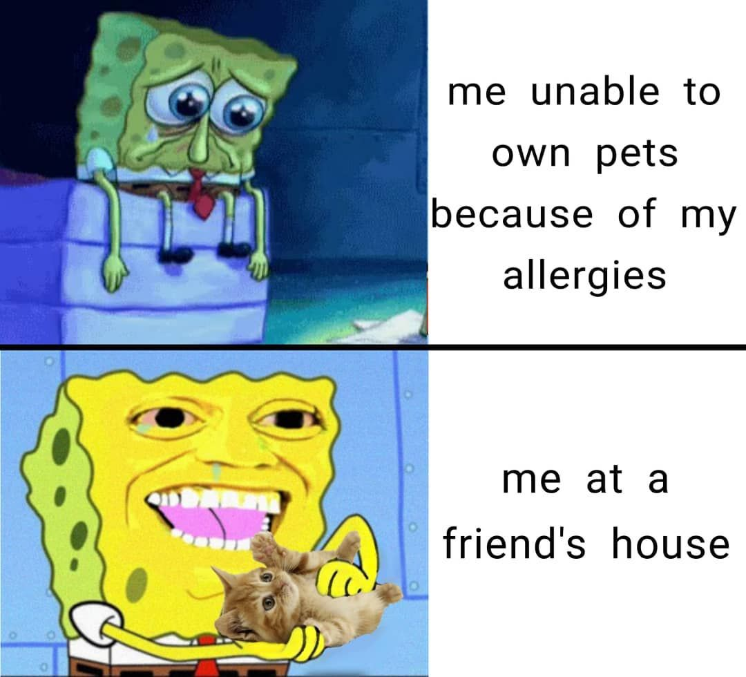 Pin By Alfie Cider On Funny Memes In 2020 Funny Spongebob Memes Funny Relatable Memes Spongebob Memes