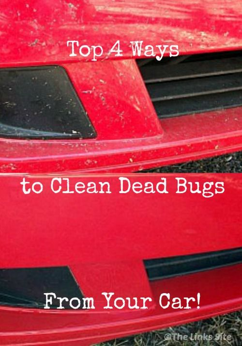 How To Get Rid Of Bugs In The Car