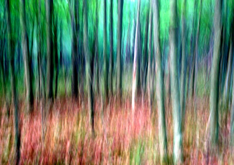 Abstract Fine Art Photography Abstract Photograph Fine Art Photography Landscape Nature Forest Abstract Square Wall Art Art
