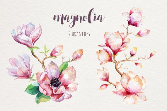 Watercolor Magnolia Flowers Floral Wedding Digital Clip Art Etsy In 2020 Flower Drawing Draw Flowers Watercolor Magnolia Flower