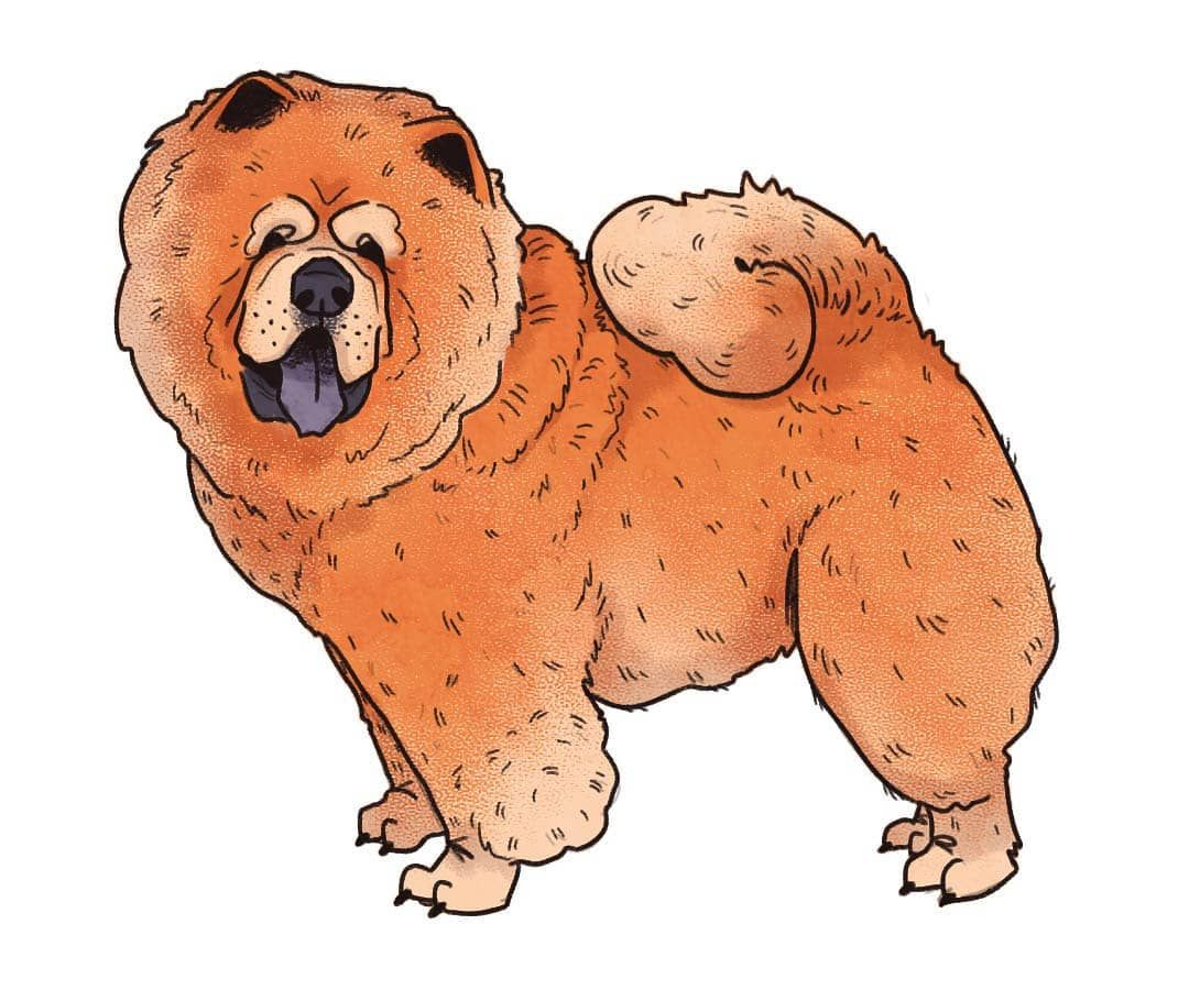 Day 11 Of Doggust Chow Chow A K A Songshi Quan Puffy Lion Dog