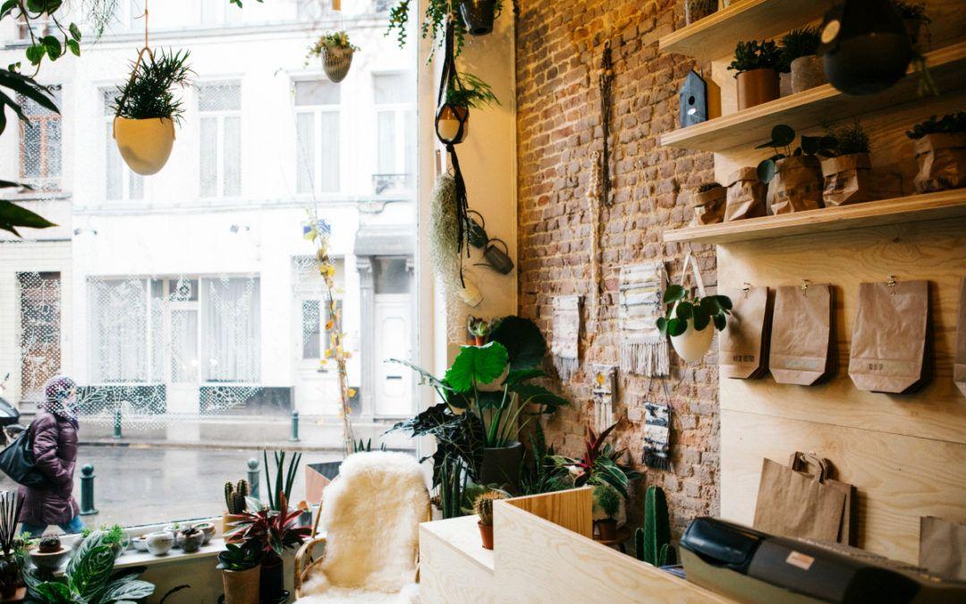 Agave, boutique de plantes d\u0027intérieur et déco tendance Agaves and