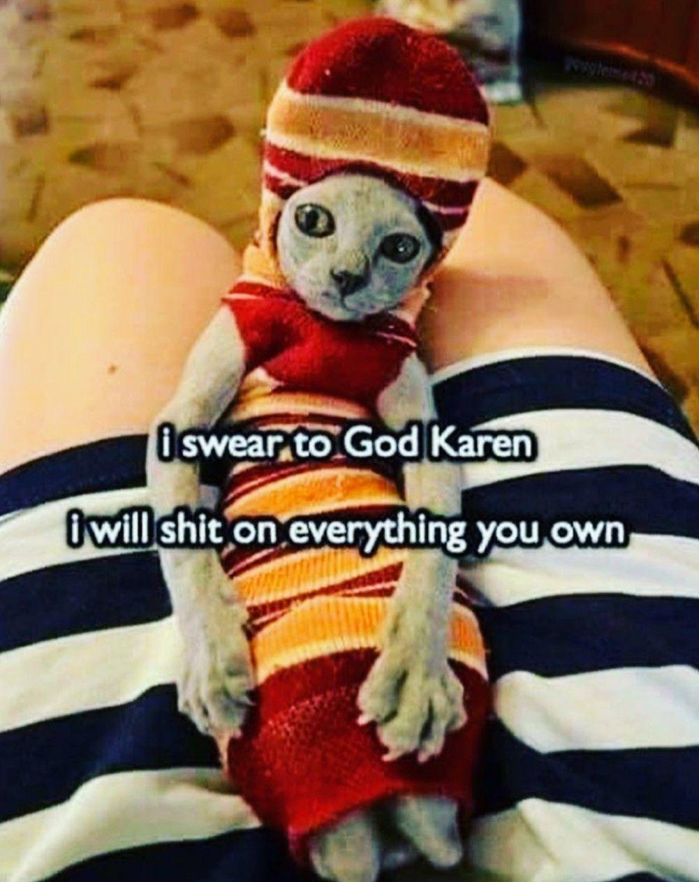 I Swear To God Karen Funny Memes Sarcastic Funny Cat Memes